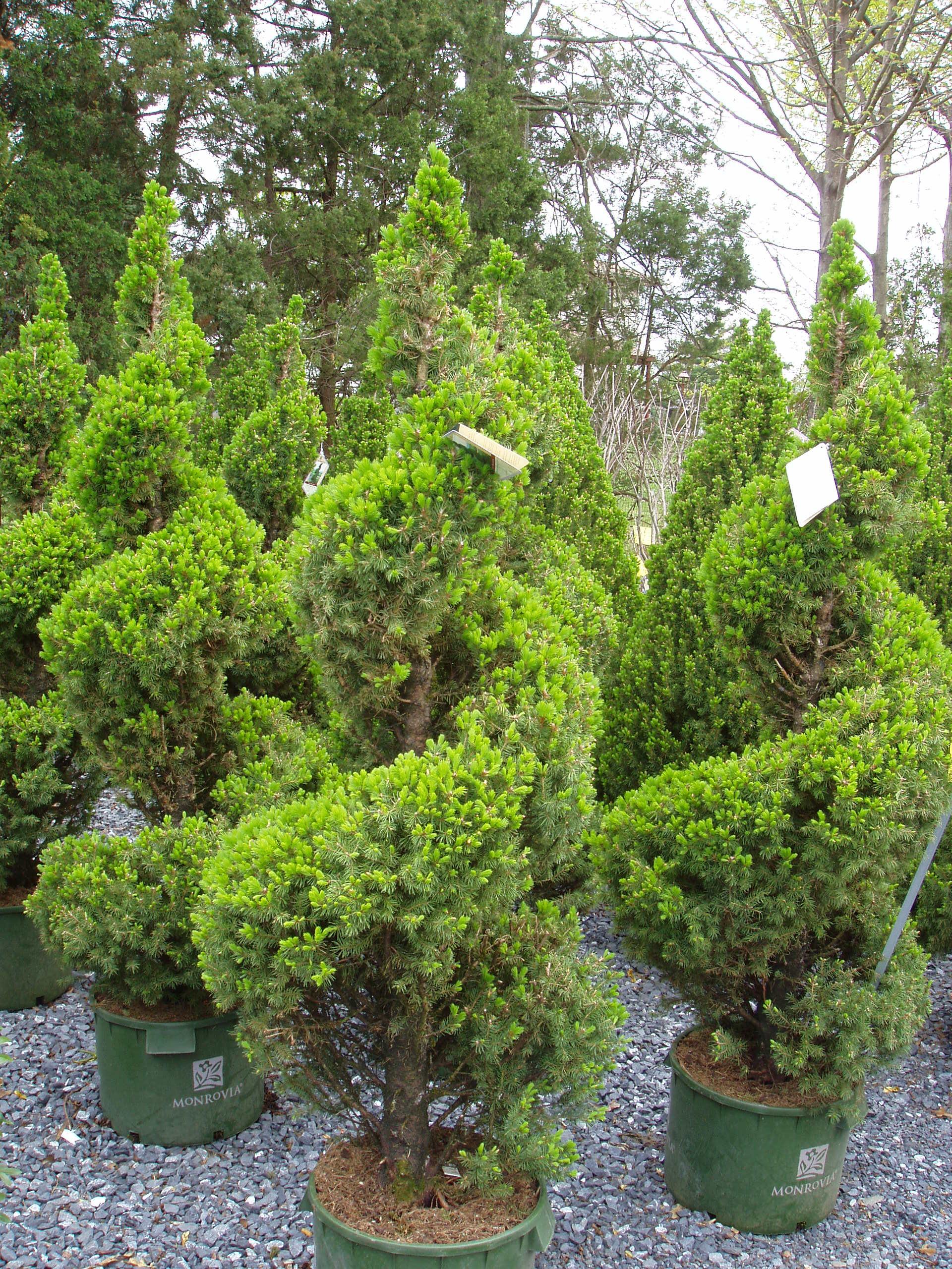 Plants We Offer Jay S Landscaping Llc